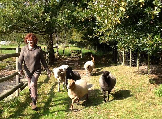 Elevage de moutons bio Vendée - Myriam Noirot et ses moutons de races Solognote, Gothland, Mérinos et Shropshire