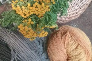 Teinture de laine naturelle avec des plantes bio